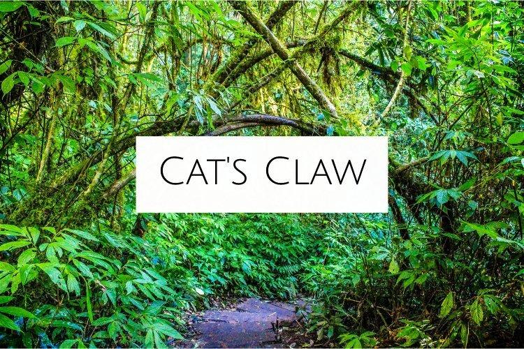 cat's claw amazonian