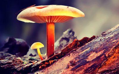 Top 10 Best Mushroom Supplements • (2021 Reviews)