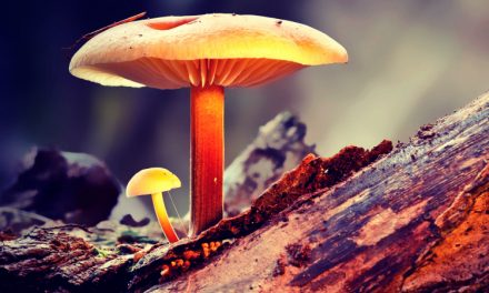 10 Best Mushroom Supplements [Ranked by a Mushroom Connoisseur]