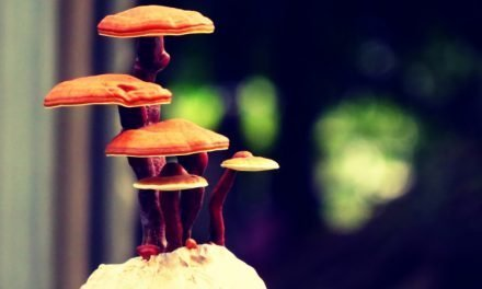 Top 5 Best Reishi Mushroom Supplements – (2020 Reviews)