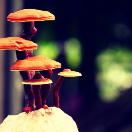 Top 5 Best Reishi Mushroom Supplements - (2020 Reviews)